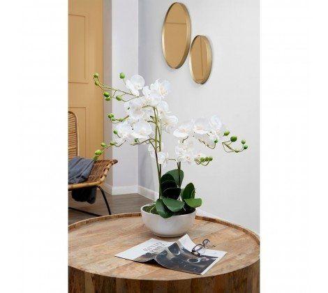 Nest Mango Wood Coffee Table
